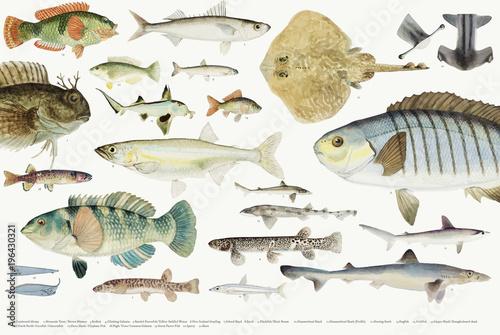 Barwiona ilustracja rybia rysunkowa kolekcja