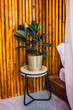 Little chair with golden flowerpot and green plant in it