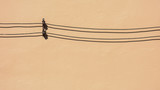 black cable and the shadow on pale orange cement wall - 196468549