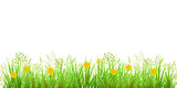 Green Grass, Dandelions and Chamomile. Long format Raster illustration