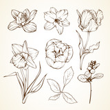 Set of flowers orchid lily tulip daffodil berries. Sketch vector illustratio.
