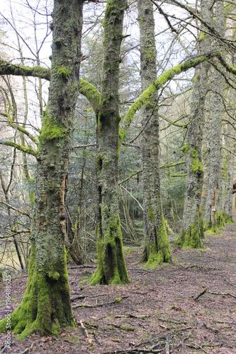 Tuinposter Weg in bos Arbres