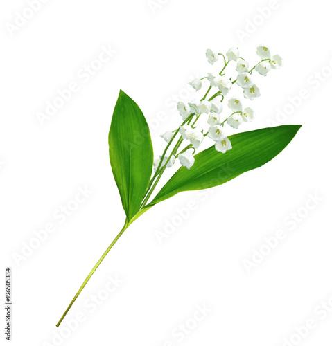 Staande foto Lelietje van dalen Lily of the valley flower