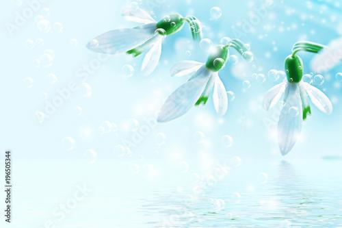 Foto op Canvas Lichtblauw The first delicate spring flower snowdrop.