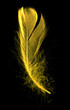 Yellow feather on a black background
