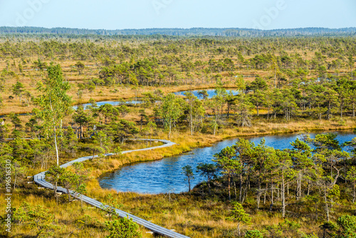 Fotobehang Honing Great Kemeri bog (Lielais Kemeru tirelis) in sunny autumn day, Latvia