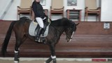 Professional horsewoman riding horse in a manege, running gallop - 196516731