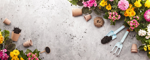 Fototapeta Gardening Tools on Shale Background. Spring Garden Works Concept