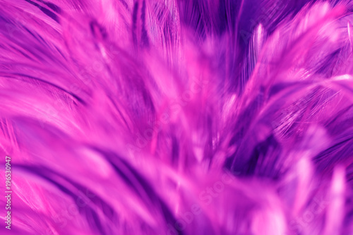 Bird and chickens feather texture for background Abstract,blur style and soft color of art design. - 196530947