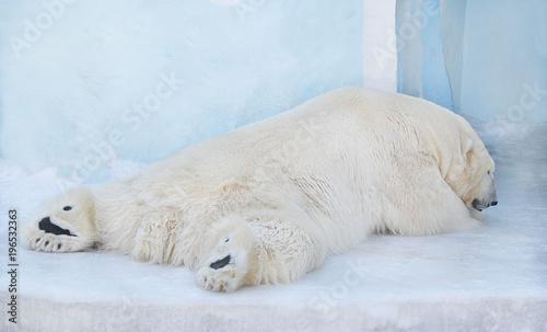 Aluminium Ijsbeer Белый медведь спит на снегу.