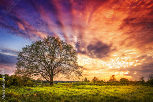 Fotobehang Koraal Majestic landscape of bright colorful sunrise over rural meadow with large tree in the spring morning. Beautiful colored cloudy sky on horizon and shining grass from sunlights. Scenery nature