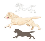 Labrador dog running isolated on white background. Active purebred canine hand drawn sketch and silhouette.  - 196541536