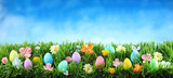 Bright colorful Easter eggs on green grass with flowers against blue sky - 196548702