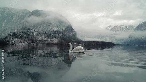 labedzie-plywajace-po-jeziorze-w-hallstatt