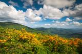 Mountain Flame Azalea Spring Flowers Scenic Landscape Appalachian Trail North Carolina