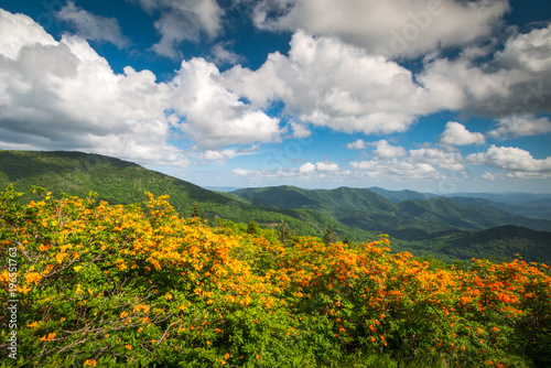 Fotobehang Azalea Mountain Flame Azalea Spring Flowers Scenic Landscape Appalachian Trail North Carolina