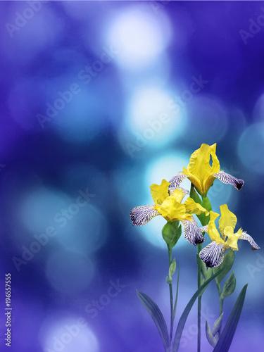 Fotobehang Iris Yellow iris flowers on the blue background