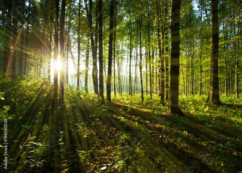Staande foto Weg in bos forest trees