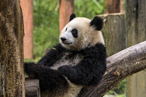 Aluminium Panda Smiling Panda