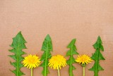 Summer background with dandelions. Dandelions on a paper background. View from above. Spring, the concept of summer. Flowers on a monophonic background.