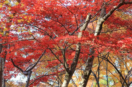 Deurstickers Koraal the fall season at Rurikou in Temple, kyoto