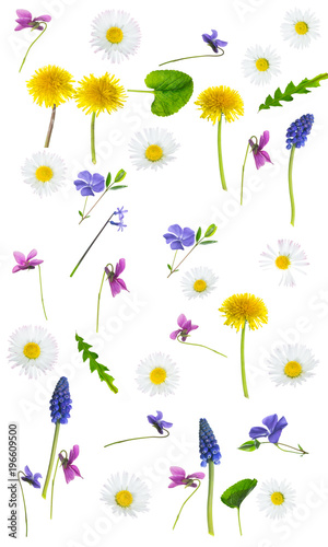 Colorful springflowers on white background