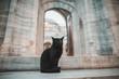 beautiful black cat sitting near old suleymaniye mosque in Istanbul, Turkey
