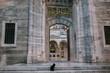 black cat sitting near entrance to suleymaniye mosque in Istanbul, Turkey