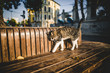 ISTANBUL, TURKEY - OCTOBER 09, 2015: cute cat on bench
