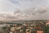 bird flying above roofs in Istanbul, Turkey
