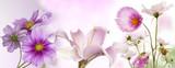 pink gardening flowers