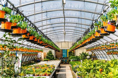 Vivaio in serra per piante