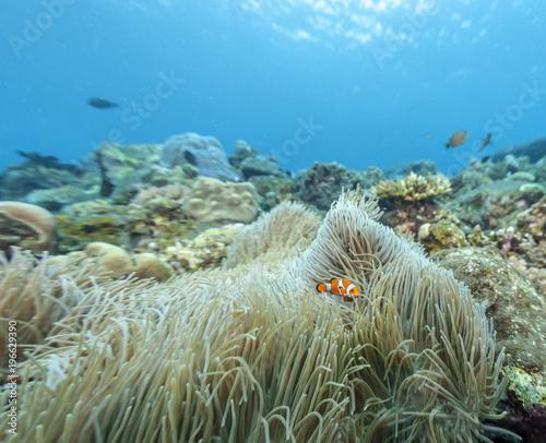 In de dag Olijf Coral reef off coast of Bali