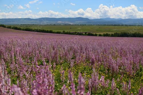 wiosenne-kwiaty-w-polu