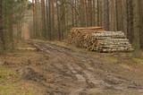 Fototapeta Forest - Drewno ułożone w pryzmy. © boguslavus