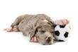 Schlafender Welpe mit Fußball isoliert auf weißem Grund
