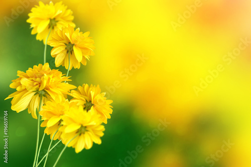 Aluminium Geel Colorful dahlia flowers on a background of the autumn landscape
