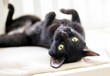 A black cat with yellow eyes lying upside down
