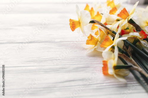 beautiful fresh daffodils in light on white wooden background top view. hello spring image with bright yellow flower on rustic wood with space for text. floral greeting card