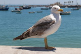 seagull - 196689159