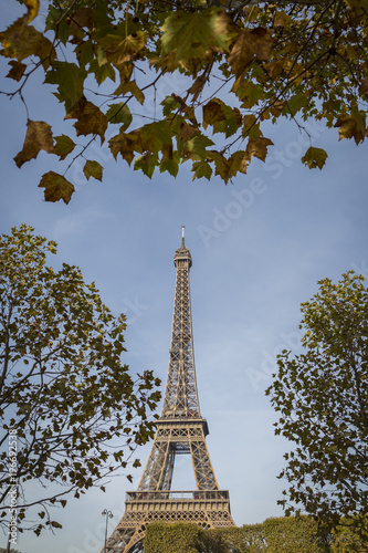View of the Eiffel Tower, Champ de Mars, Paris, France framed by leafy green tre Poster