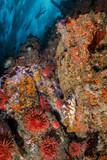 Big Sur Reef Scene