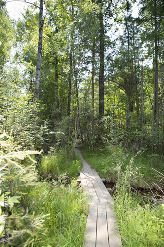 Tuinposter Weg in bos Wooden path in the forest