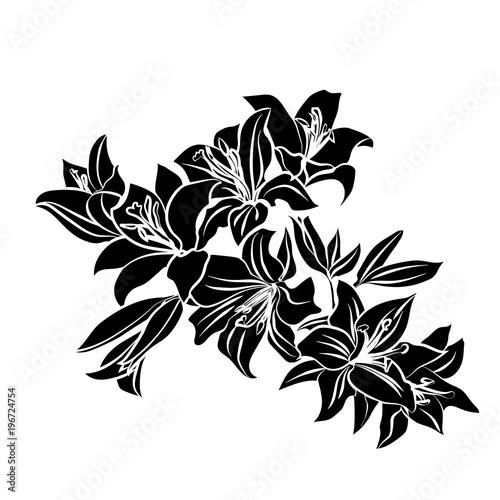 Fototapeta Black silhouette Lily.