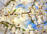 Spring scenes, including blooming flowers, cherry blossoms