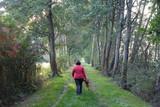 Weg zwischen Bäumen - 196745790