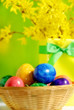 Colorful easter eggs in bowl with ribbon and flowers of golden rain tree