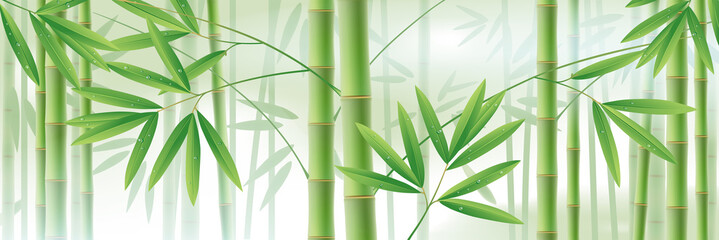 Horizontal background with green bamboo stems and leaves on white © Raman Maisei