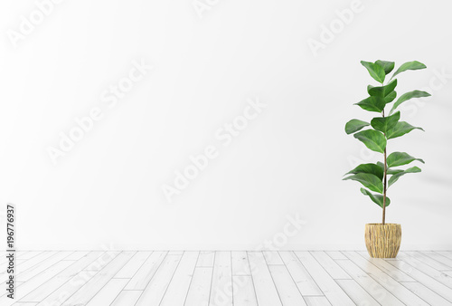 Interior background with plant 3d rendering