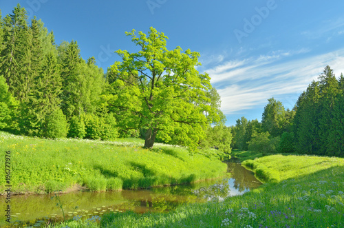Aluminium Lime groen Sunny landscape in the forest.